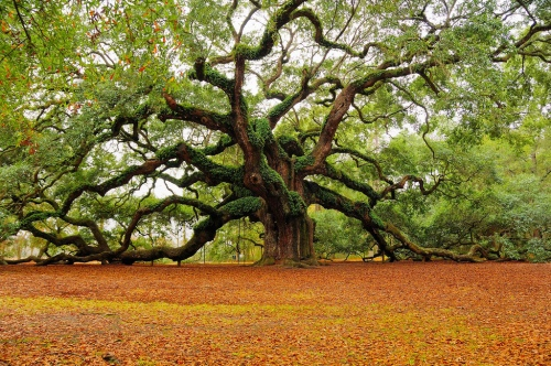 best-picture-gallery-angel-oak-south-carolina-MarkRegs